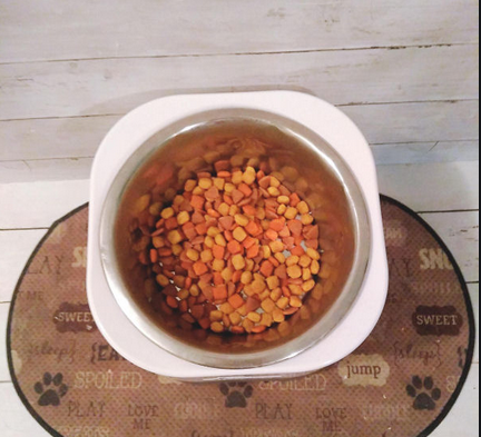 Outdoor Dog Bowl, Anywhere, Anytime